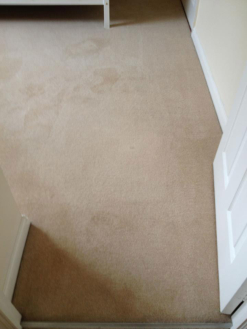 Malvern Carpet Cleaners